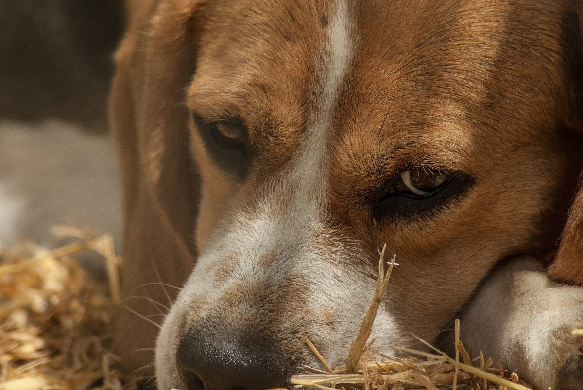 Бразилия: суд назначил моральную компенсацию двум собакам